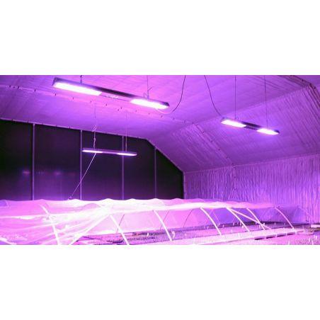 Lampa LED Growy 200W